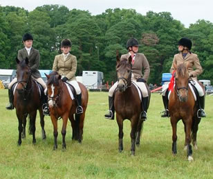 New Forest Pony Breed Standards